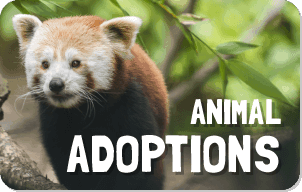 Animal Adoptions button