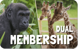 Dual Membership button