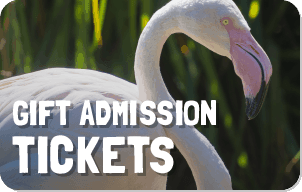 Gift Admission Tickets button