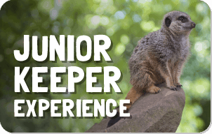 Junior Keeper Experience button