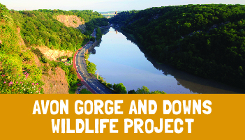 Avon Gorge & Downs Project