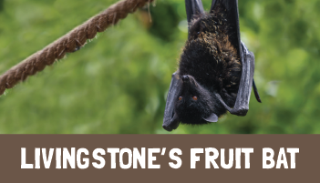 Livingstone's Fruit Bat Project