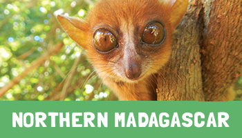 Northern Madagascar Project