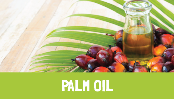 Palm Oil Project